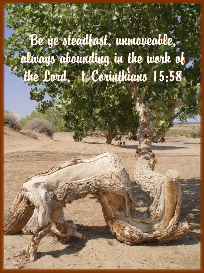 Steadfast 1