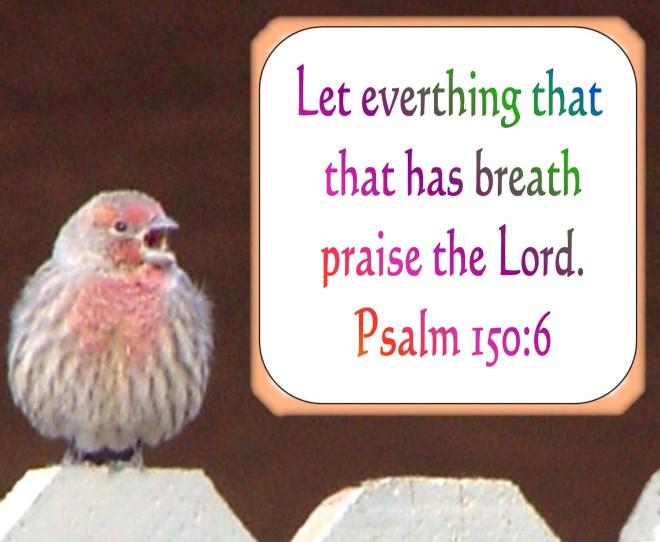 Breath Praise done