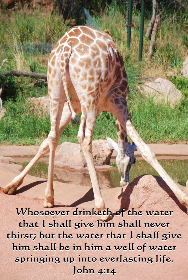 giraffes-done